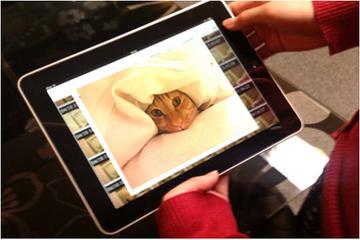 留守宅での猫たちの思わぬ可愛い画像が撮れていると、むふふと嬉しくなる