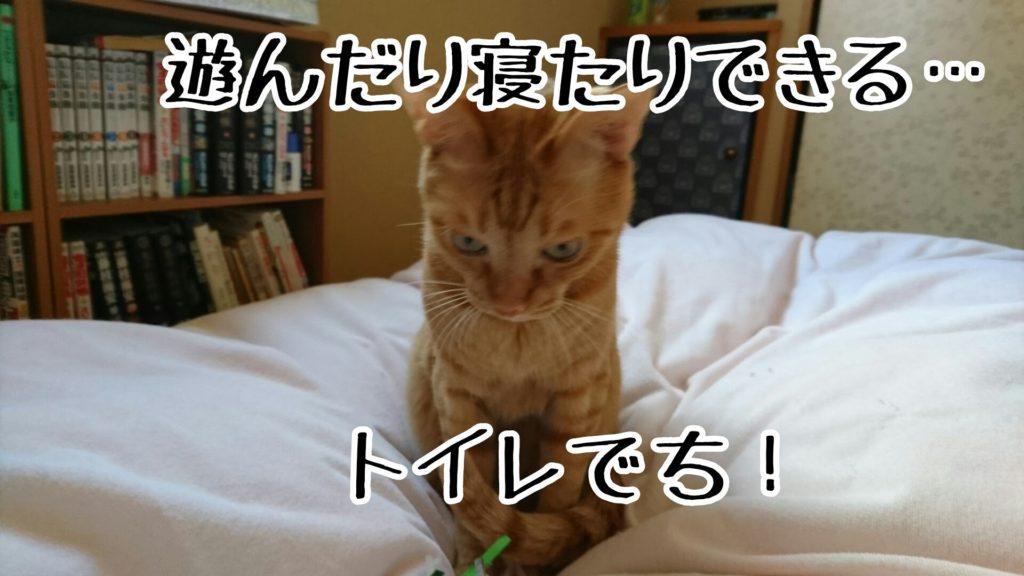 普通の猫は寝床でトイレなんかしない…と思う