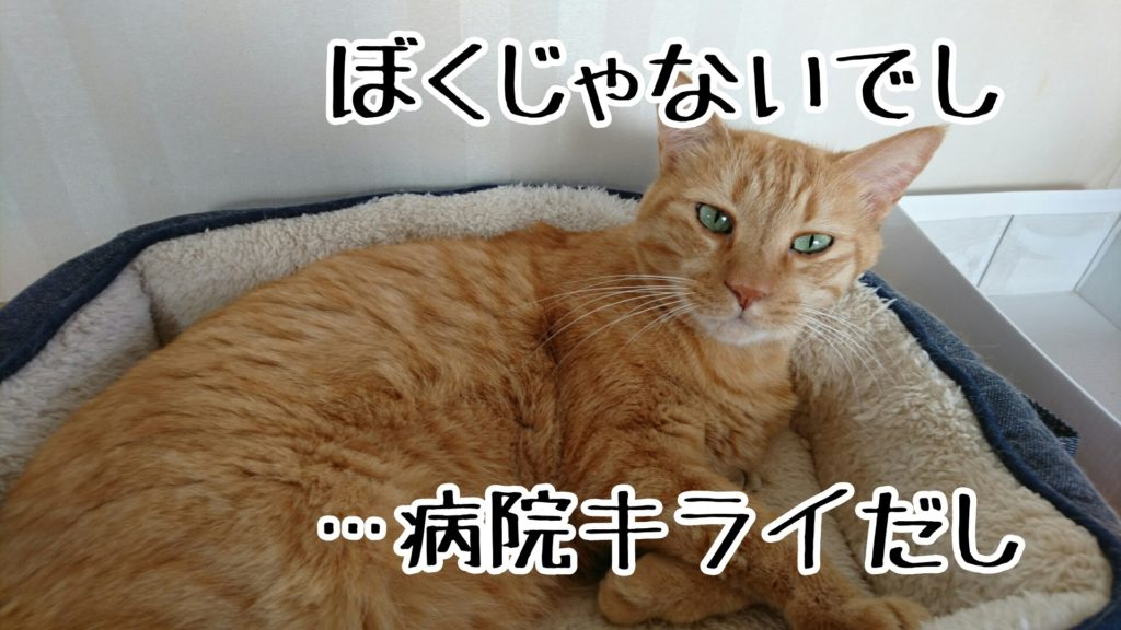 短毛の猫はゲリしても毛につかないから、わかりにくい