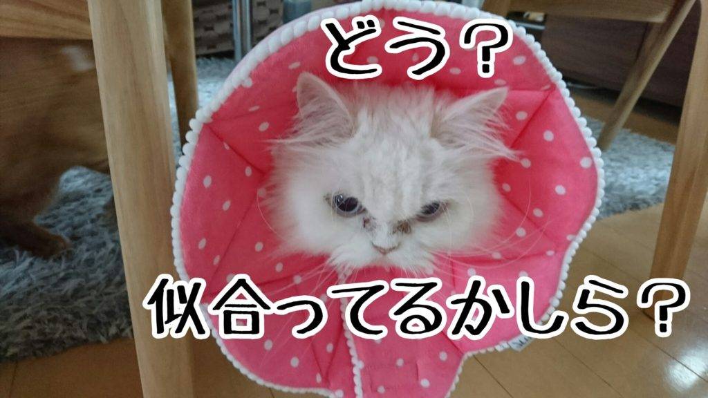 布製のカラーは柔らかくて、猫への負担が少ないのがいいんですが...