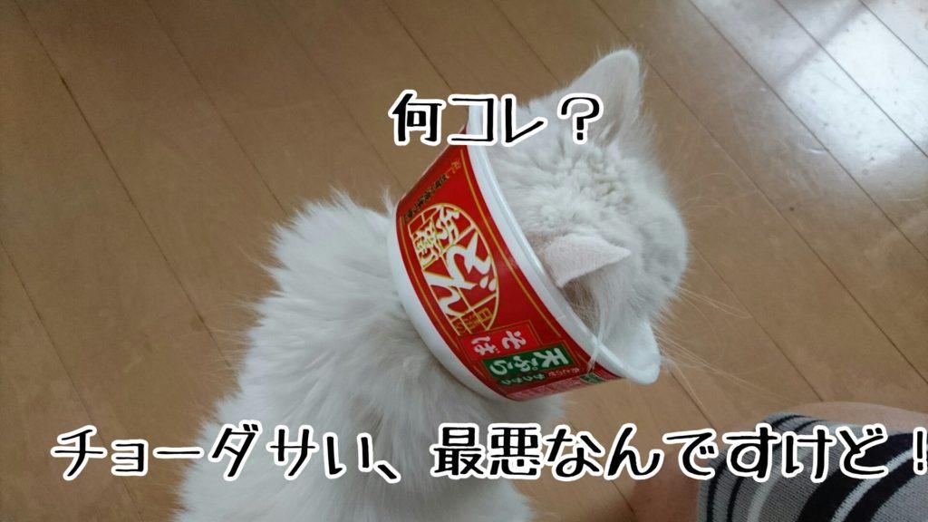 どん兵衛を食べた後のカップの底を猫の首のサイズに丸く切った自家製エリザベスカラー