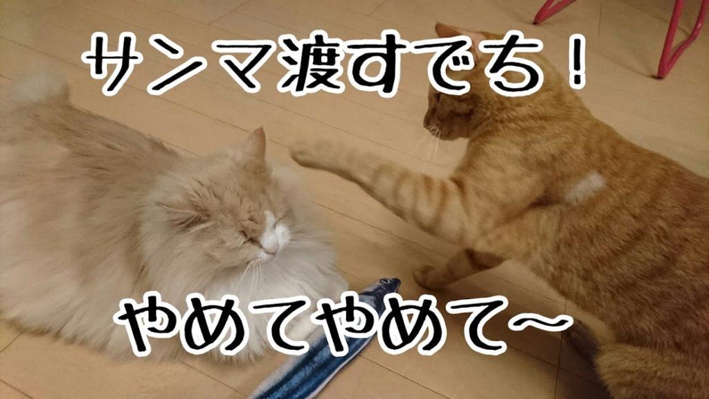 サンマが欲しいケッタ、おじいちゃん猫から強奪しようと