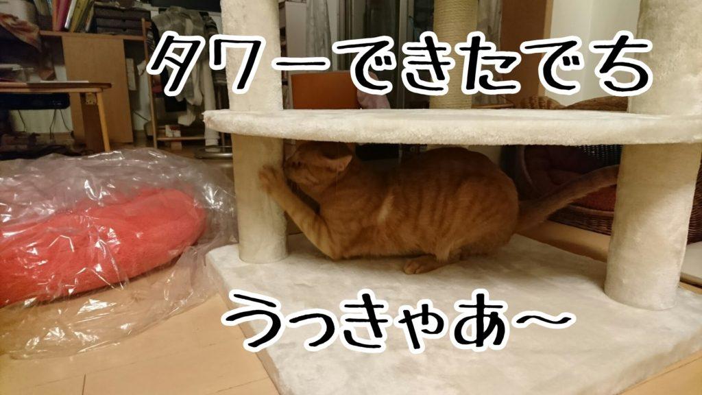 ニュー猫タワーに一番乗りするのは、やっぱり若いケッタ