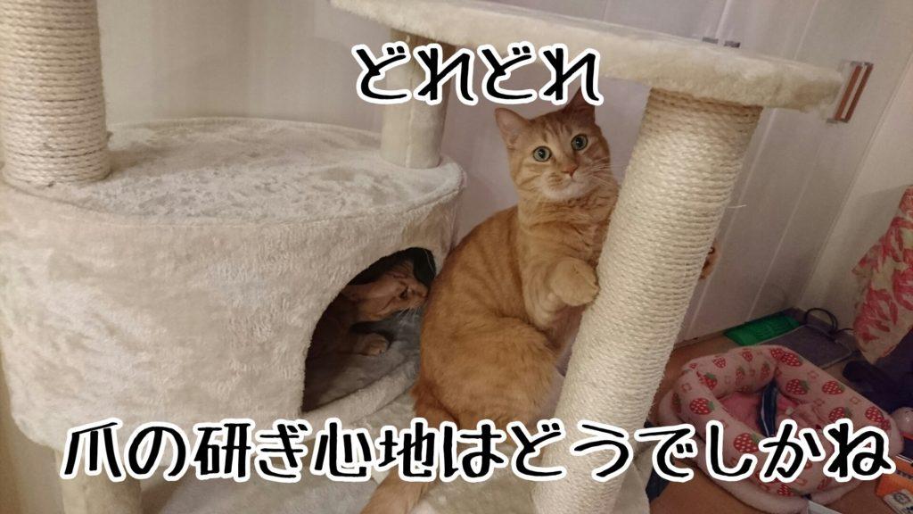 猫が爪を研ぐのも、自分の匂いをつけるマーキング行為のひとつだそう
