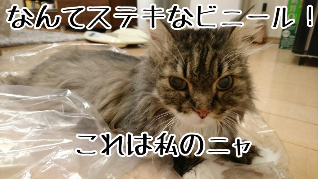 誰かヒトリくらいは、タワーの入っていた段ボールやビニールに入ってご満悦の猫がいる