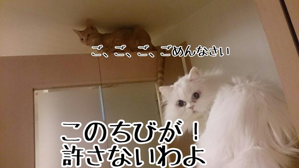 子猫でも容赦なし。無礼を働いた日には、徹底的に追い詰める