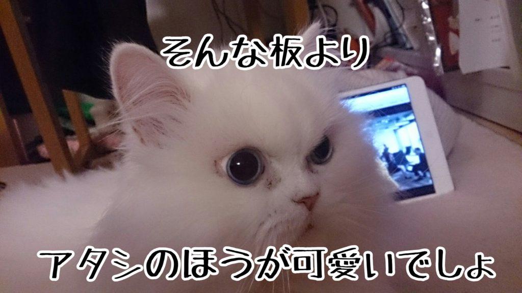 携帯を見てても、ipadでも本でも、他の猫を可愛がっていても、気に入らないらしい
