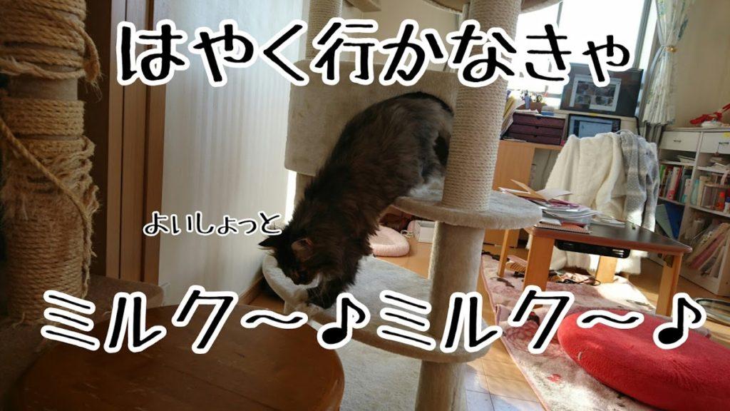 猫タワーで寝ていてもすぐに降りてくる