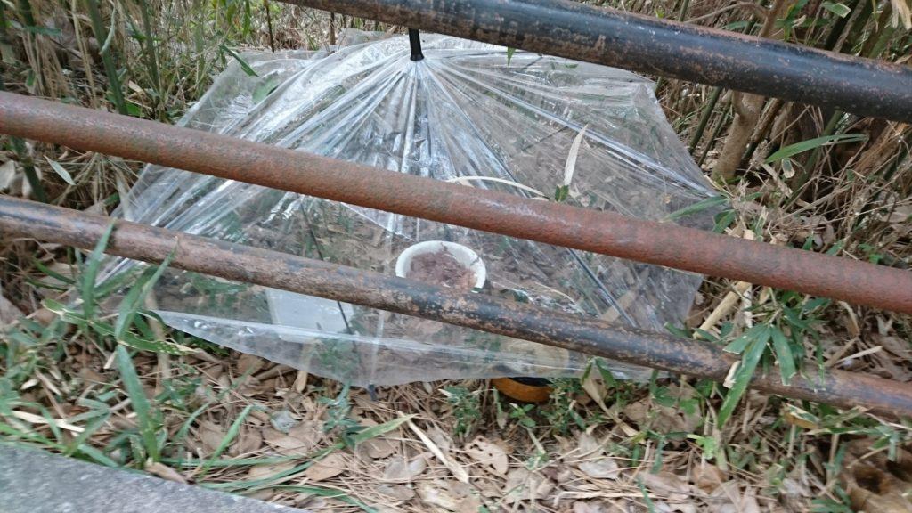 雨が降っても外猫さんの餌が濡れないように、ビニール傘をさしてあげている心優しい餌やりさん