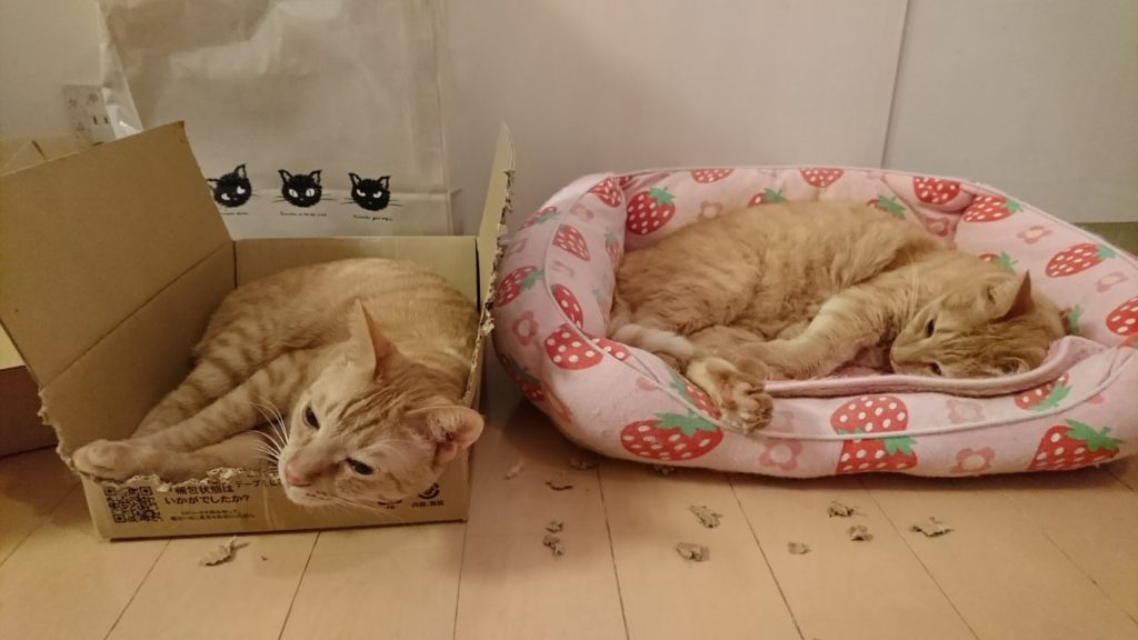今はすっかり家猫に順応していますが、ててぃんもケッタも保護猫でした