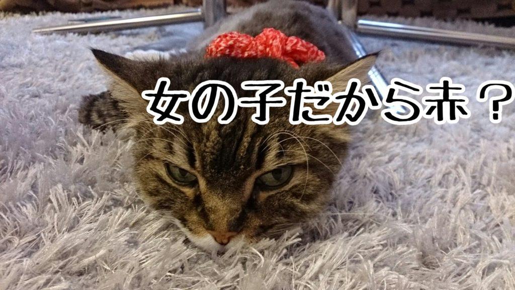 七五三の髪飾りを、猫の首にふんわり結ぶ。江戸時代っぽくてよいのではない?