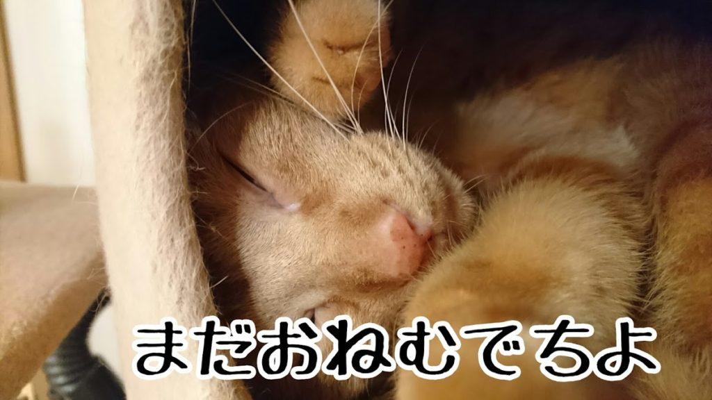 寝ぼけて目が半開き。半目開けて寝てると怖いぞ〜
