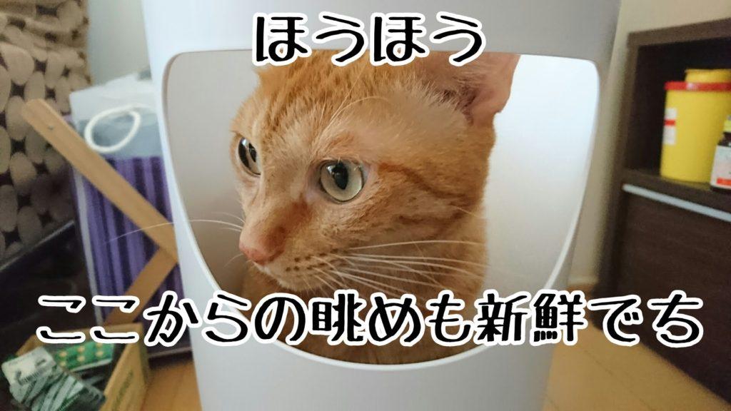 わざわざ横に捨て口のあるゴミ箱を買ったのに、入る猫