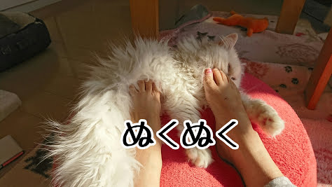 冷たい足を花ちゃんの腹毛の中に埋める、あ〜幸せ!